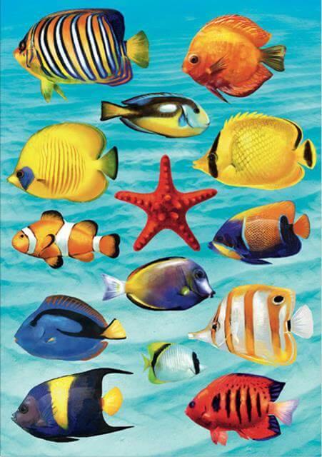 Подводный мир красного моря опасен и такой разновидностью рыб, как рыба-камень.